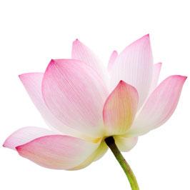 Lotusblumen Extrakt - 5% Flavones