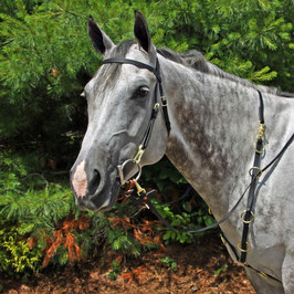 10 Ring Training Martingale - Martingala in Biotane USA