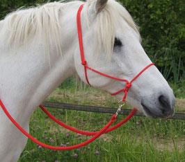 Bitless rope natural horsemanship