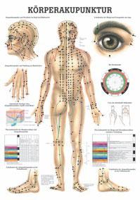 Lehrtafel Körperakupunktur
