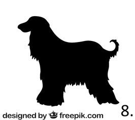 Hund Nr. 8