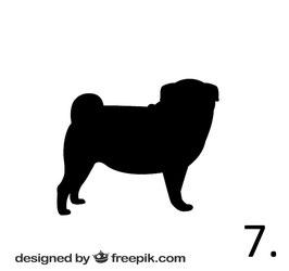 Hund Nr. 7