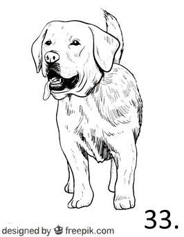 Hund Nr. 33