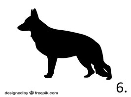 Hund Nr. 6
