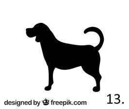 Hund Nr. 13