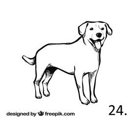 Hund Nr. 24