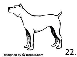 Hund Nr. 22