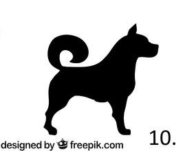 Hund Nr. 10