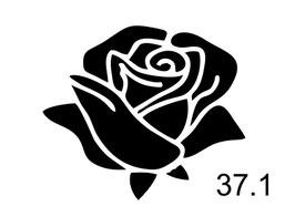 Blume Nr. 37.1