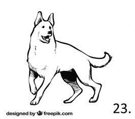 Hund Nr. 23