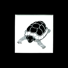 """Tuschezeichnung """"Schildkröte"""