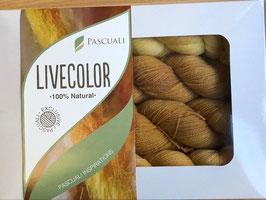 LiveColor von PASCUALI 4 x 50g Merino Baby Lace