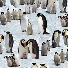 Pinguine, Elizabeth´s Studio 03241950821