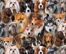 Hunde Porträts, Elizabeth´s Studio, 09070050617