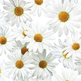 Margeritten, Bloom with a View, Kanvas Studio 06129950518
