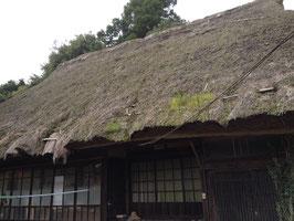 豊栄コシヒカリ10kg(28年産玄米)