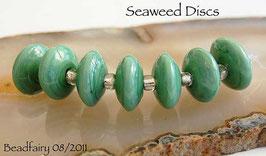7 Seaweed Discs