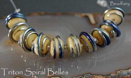 10 Triton Ivory Spiral Belles