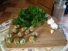 Escargots traditionnelles en coquille avec une farce au beurre persillé