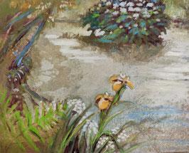 Iris jaunes