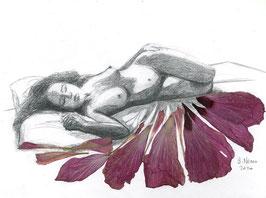 Nature endormie