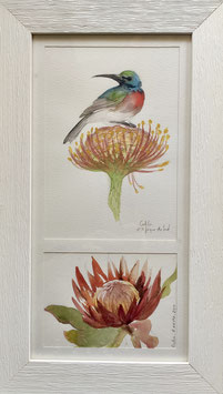 Colibri & Protéa