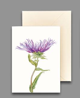 Grußkarte Kornblumenaster Artikelnr. kl213
