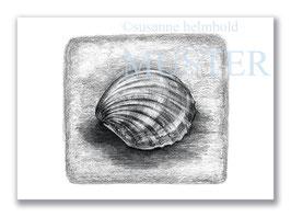 Kunstkarte Herzmuschel Artikelnr. s101