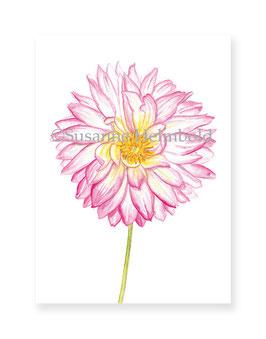 Minikarte Dahlie rosé, Artikelnr. mk016