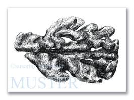 Kunstkarte Koralle Artikelnr. a103
