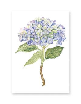 Minikarte Hortensie blau, Artikelnr. mk004