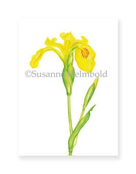 Minikarte Sumpfschwertlilie, Artikelnr. mk014
