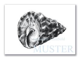 Kunstkarte Riesenkreiselschnecke Artikelnr. a104