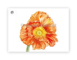 Geschenkanhänger Papaver orange, Artikelnr. gs007