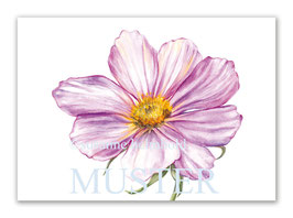 Kunstkarte Cosmea Artikelnr. sb104