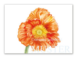 Kunstkarte Papaver orange Artikelnr. sb108