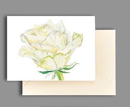 Grußkarte Rosenblüte weiß Artikelnr. kl285
