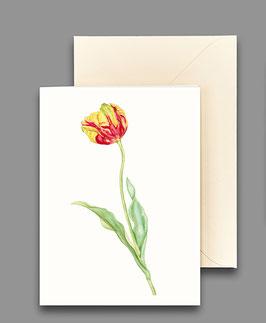 Grußkarte Tulpe rotgelb Artikelnr. kl225