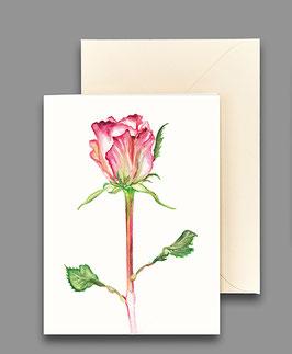 Grußkarte Rose espérance Artikelnr. kl233