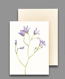 Grußkarte Glockenblume Artikelnr. kl231