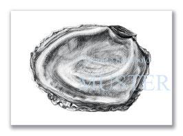 Kunstkarte Auster Artikelnr. a106