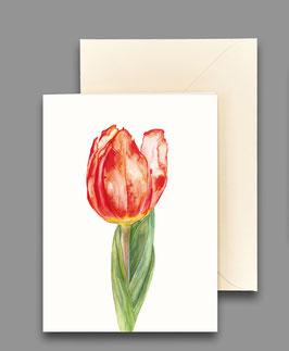 Grußkarte Tulpe Artikelnr. kl209