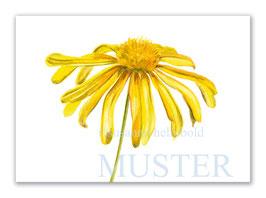 Kunstkarte Goldmargerite Artikelnr. sr107