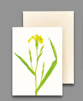 Grußkarte Sumpfschwertlilie Artikelnr. kl239