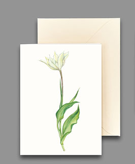 Grußkarte Tulpe weiss I Artikelnr. kl222