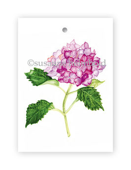 Geschenkanhänger Hortensie rosa, Artikelnr. gs024
