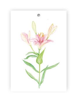 Geschenkanhänger Glockenblume, Artikelnr. gs037