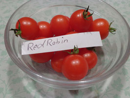 "Buschtomate ""Red Robin"""