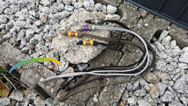"Schlüssel- / Clickerband ""Surprise"""