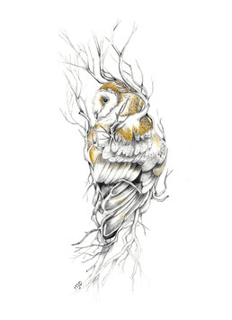 Bubonem Quereus Patrea - Wise Owl of the Oaks